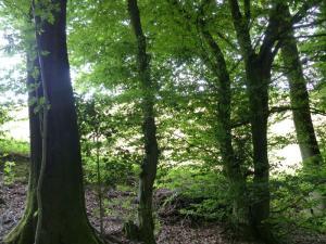 D1 Siefen, Wälder und Höhen 010