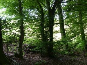 D1 Siefen, Wälder und Höhen 011
