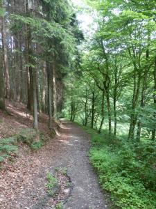 D1 Siefen, Wälder und Höhen 012