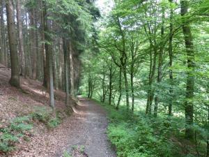 D1 Siefen, Wälder und Höhen 013