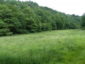 D1 Siefen, Wälder und Höhen 014