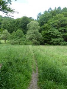 D1 Siefen, Wälder und Höhen 015