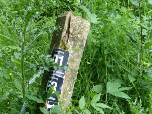 D1 Siefen, Wälder und Höhen 016